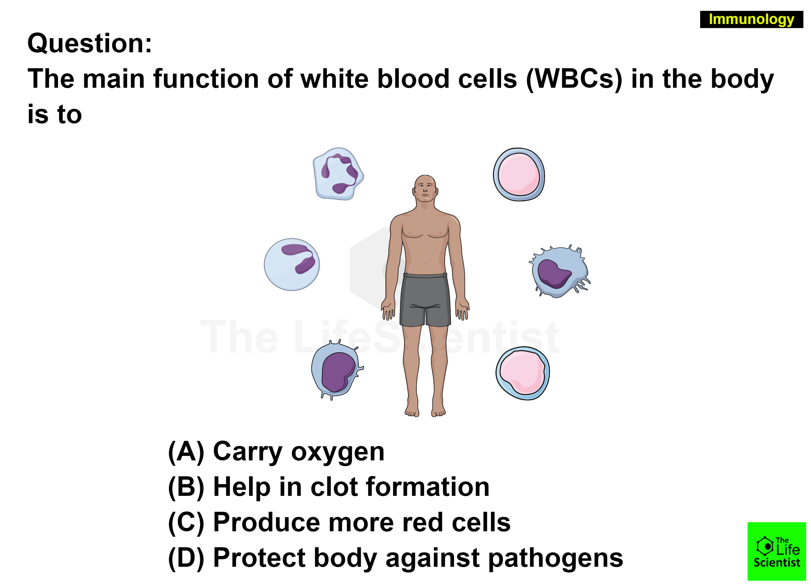 how to boost white blood cells during chemo